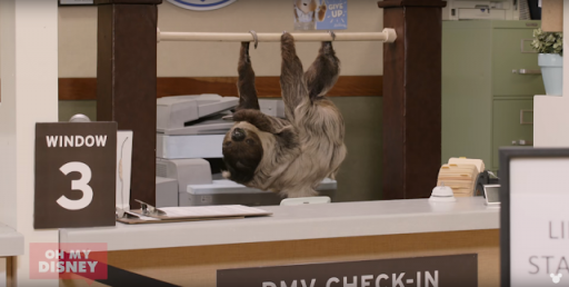 Sloths take over a real DMV!